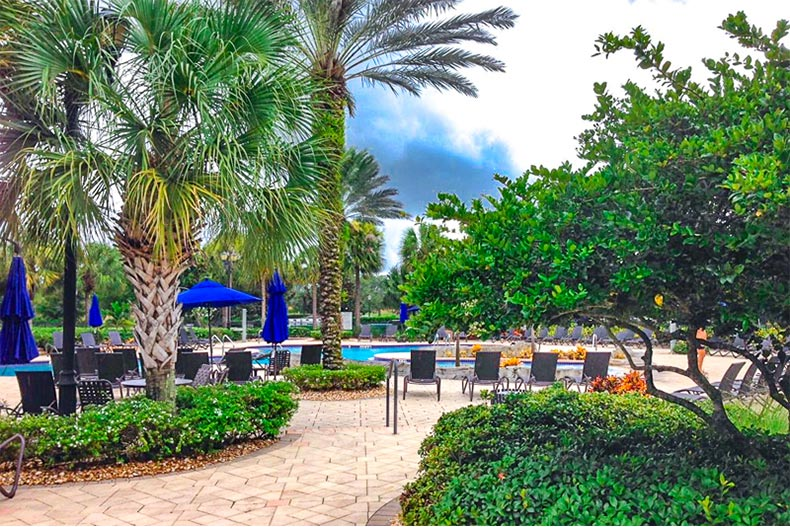 Patio and resort-style pool with greenery and trees around it in Pelican Preserve