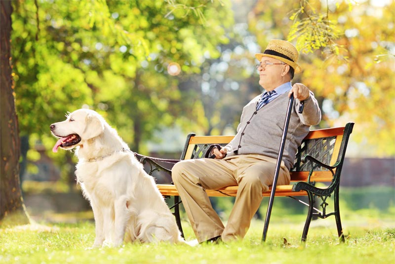 senior man in park on bench with pet dog on leash