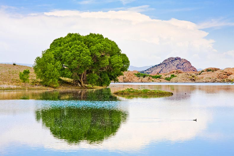 Tree on the edge of Lake Watson in Prescott, Arizona