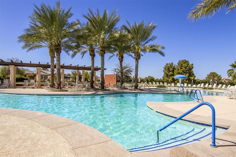 Palm trees beside the outdoor pool and patio at Province in Maricopa, Arizona