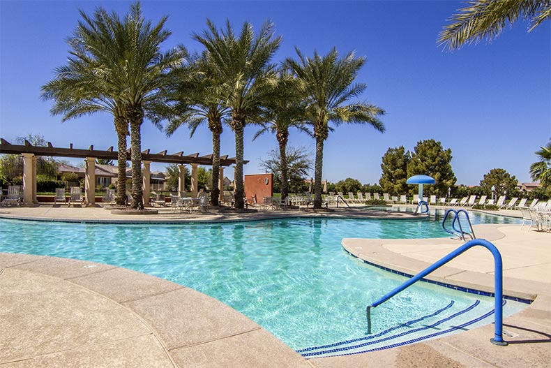 Palm trees surrounding the outdoor pool at Province in Maricopa, Arizona