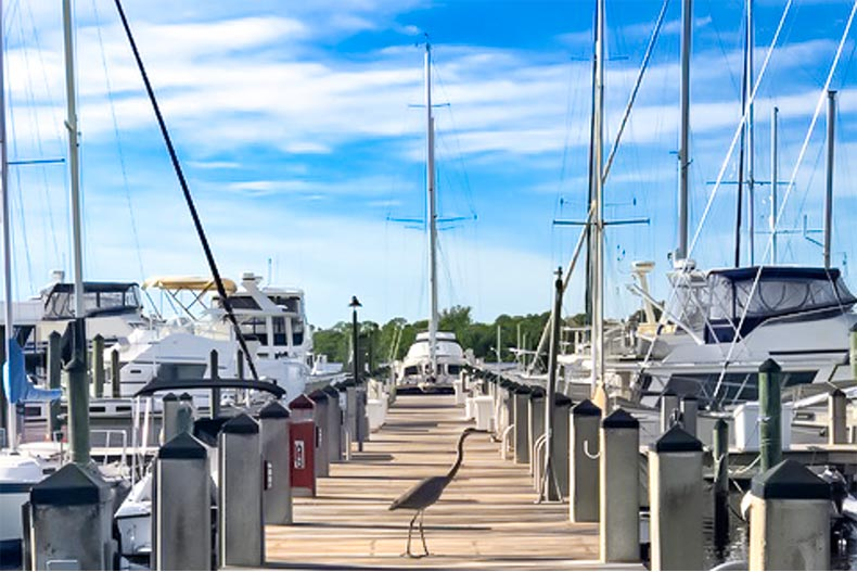 Boats at dock with bird walking on dock in Tarpon Bay Yacht Club