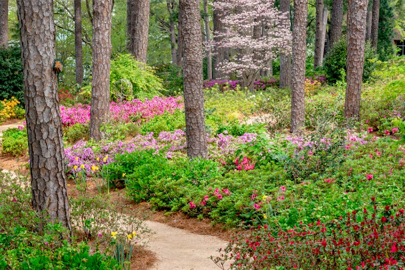 Pathway through a blooming flower garden in Raleigh, North Carolina