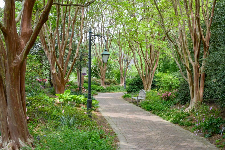 Trees lining a path through a botanical garden near Richmond, Virginia