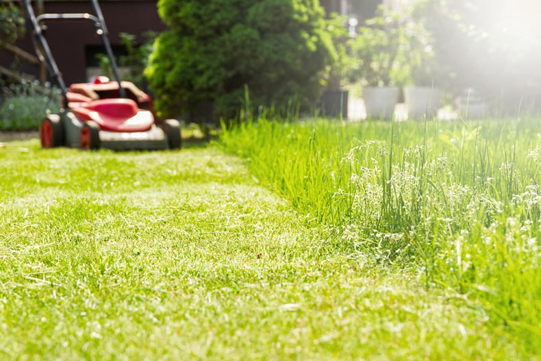 A lawn mower cutting long, green grass in a yard