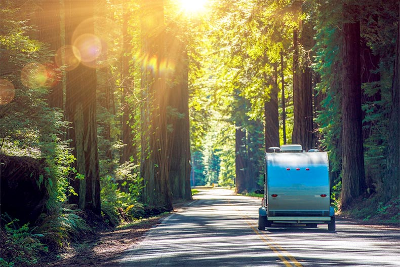 Travel trailer RV driving down a road in a green forest