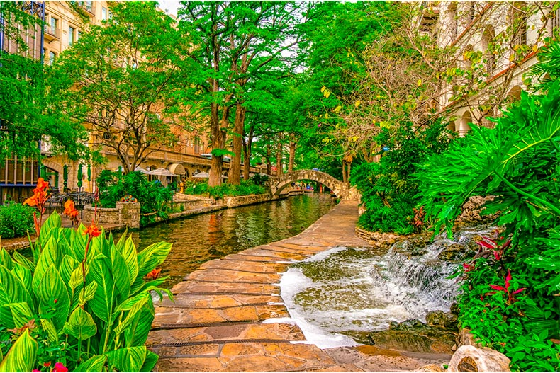 Vibrant greenery in bloom along the riverwalk in San Antonio, Texas