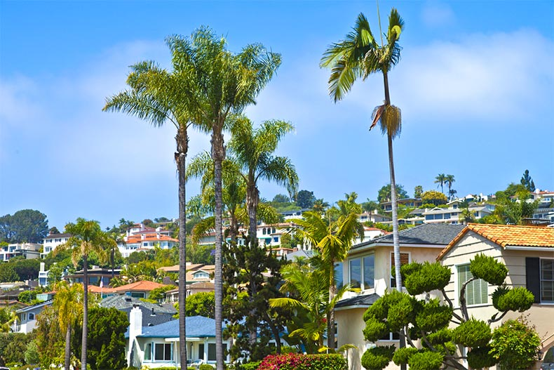 Palm trees and homes in the hills of San Diego
