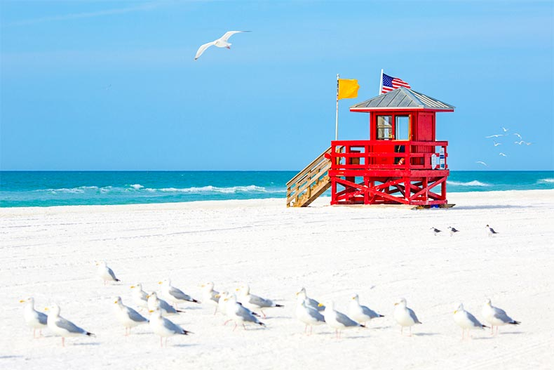 Seagulls and a lifeguard stand on a beach in Sarasota, Florida