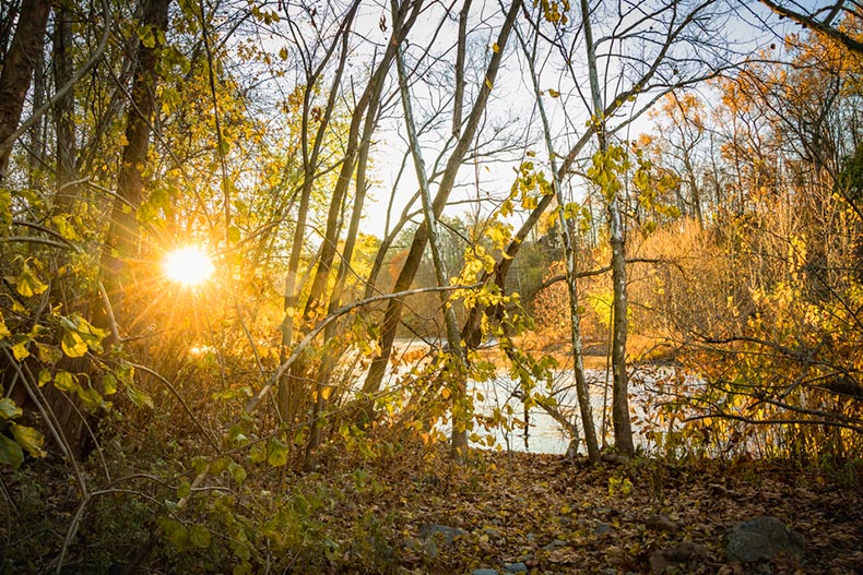 Sunlight peeking through yellow leaves on a tree-lined riverbank near the Schuylkill River in Pennsylvania