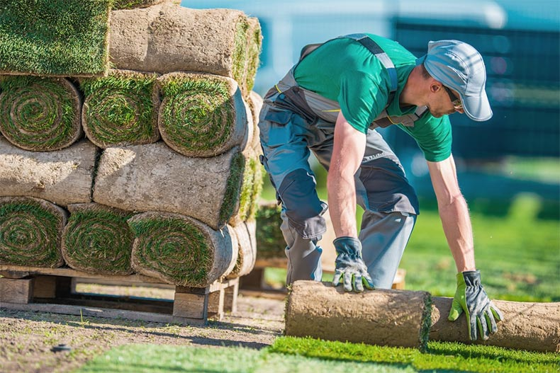 A landscaper installing rolls of sod to create a beautifully green lawn