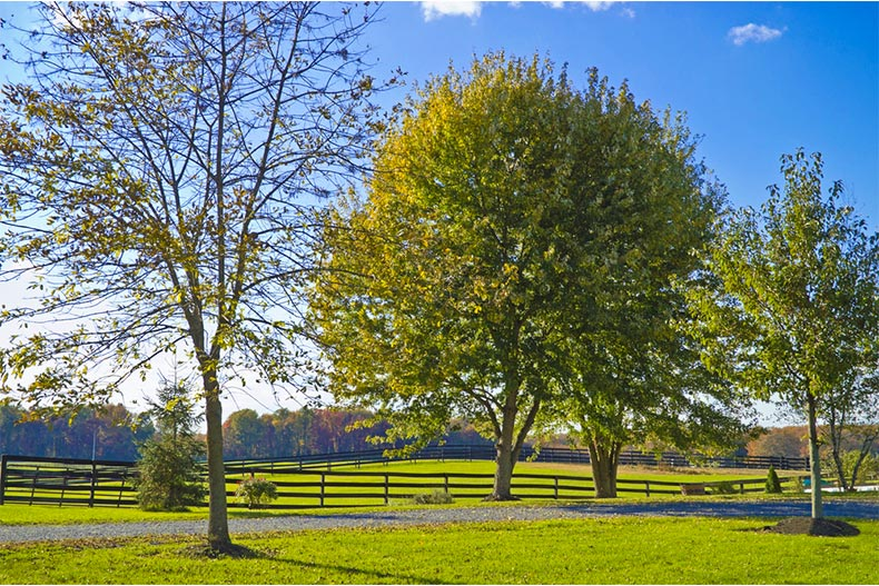 Trees in a green meadow in New Jersey