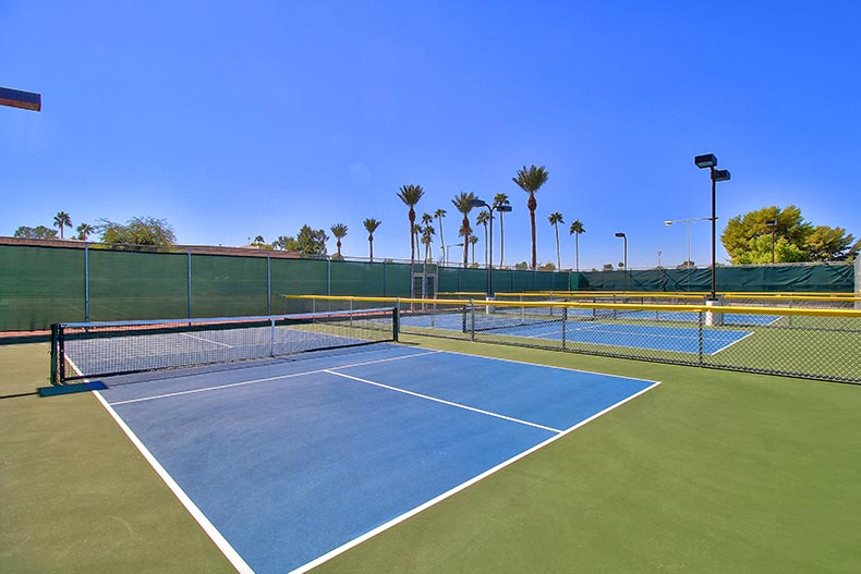 Palm trees around the outdoor tennis courts at Sun City in Sun City, Arizona