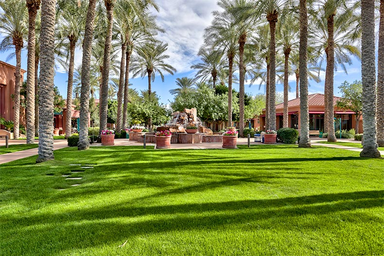 Greenspace with palm trees and a fountain on the grounds of Sun City Grand in Surprise, Arizona