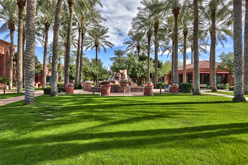 Palm trees on the grounds of Sun City Grand in Surprise, Arizona