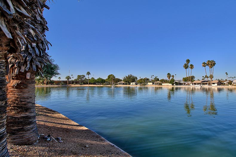 Picturesque view of a pond surrounded by palm trees at Sun City in Arizona