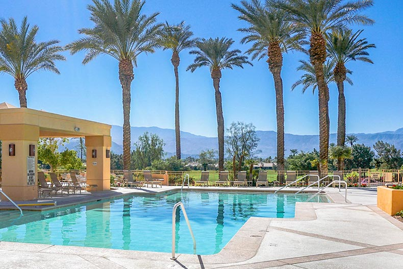 Palm trees surrounding the outdoor pool and patio at Sun City Palm Desert in Palm Desert, California