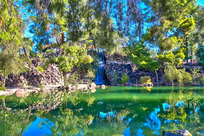 Tree branches overhanging a pond with waterfall in Sun City