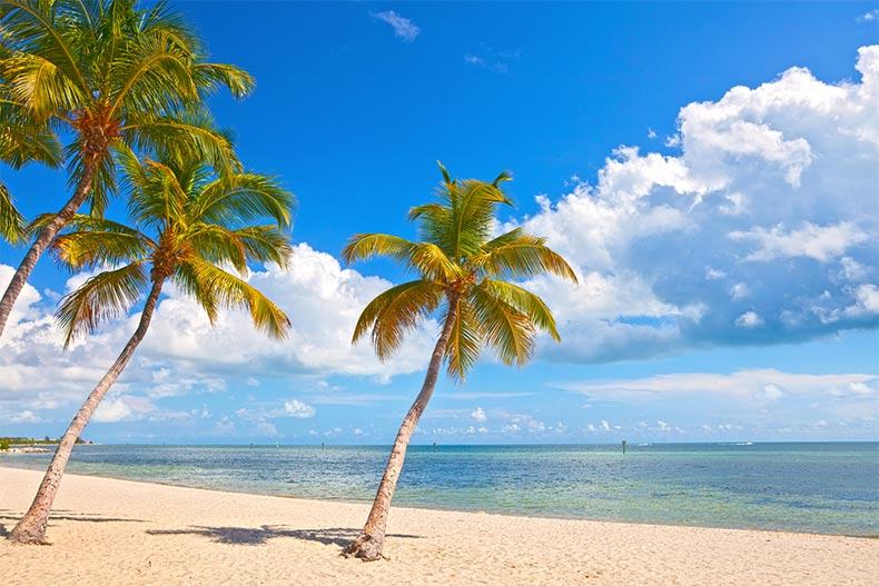 Palm trees on a beach in the Key West in South Florida