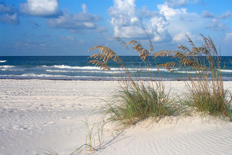 Sea oats and surf on a beach along Florida's Gulf Coast near Tampa Bay