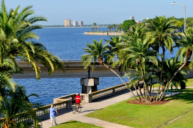 Blue sky and green palm trees along Bayshore Boulevard in Tampa, Florida