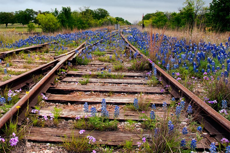 An abandoned railroad overgrown with Texas wildflowers