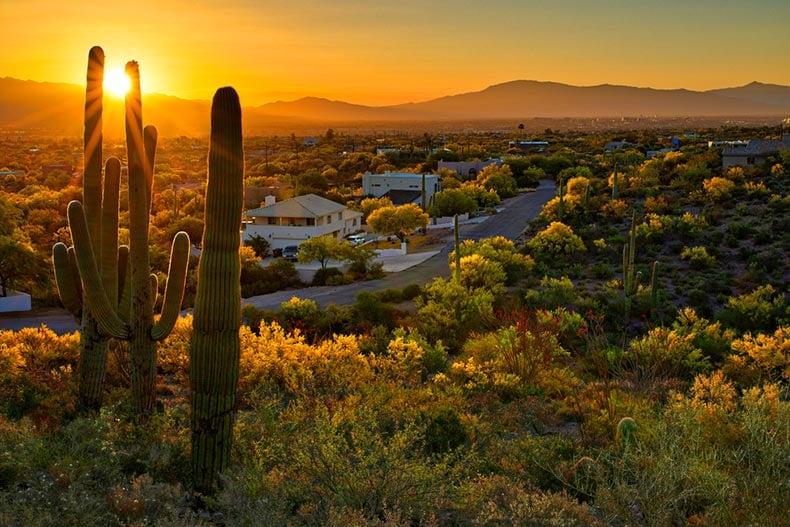 Sunset view of houses between Saguaros in Tucson, Arizona