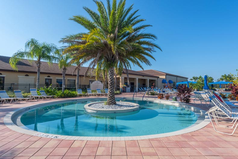 A palm tree in the middle of an outdoor pool at Valencia Lakes in Wimauma, Florida