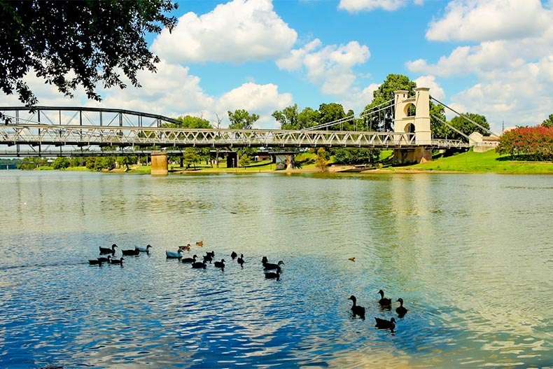 Ducks on the water near a bridge in Waco, Texas