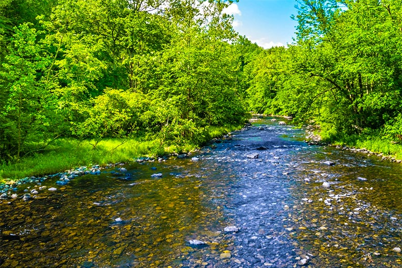 Clear creek surrounded by leafy trees in Warren County, NJ