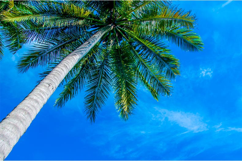 View from beneath a palm tree looking up at a blue sky