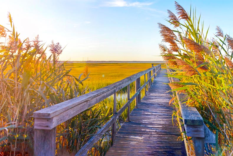 Tall grass breezing over a wooden walkway